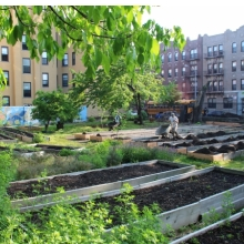 <p>Linda Goode Bryant (American, b. 1949) and Project EATS. <em>Moving Compost (Amboy Garden Farm, Brownsville, Brooklyn)</em>, 2013. Compost, soil, wheelbarrows, shovels, community resident participation, 25 cubic yards of compost spread over 2,226 square feet of land. Project EATS, &copy; Active Citizen Project. Photo: Linda Goode Bryant, Active Citizen Project</p>