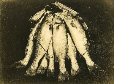 "<em>""Beach Haven: the great seashore opportunity. Views of Beach Haven. View 53: fish.""</em>, 1900-1914. Bw photograph (original print), 9 x 7in (23 x 18cm). Brooklyn Museum, Beachhaven. (F142_O2_B35_Beachhaven_051.jpg"