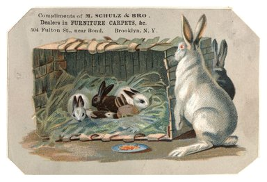"<em>""Tradecard. M. Schulz & Bro. 504 Fulton Street. Brooklyn, NY. Recto.""</em>. Printed material, 4.5 x 3 in (11.4 x 7.7 cm). Brooklyn Museum, CHART_2012. (HF5841_C59_v1_p50_tradecard02_recto.jpg"
