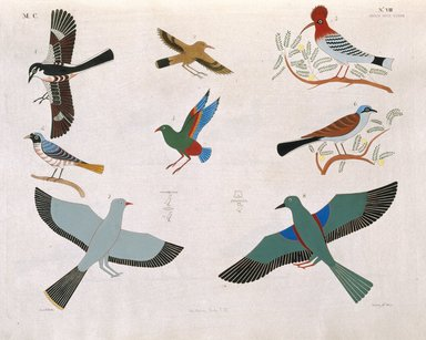 """<em>""""Varie speci d'occelli rappresentati nelle cacce. La maggior parte sono distinti coi loro antichi nomi scritti in geroglifici.""""</em>. Color transparency, 4x5in. Brooklyn Museum. (Photo: Brooklyn Museum, N378_R72_SCR_Rosellini_Monumenti_v2_plVIII_SL1.jpg"""