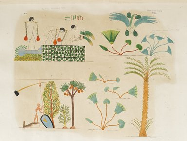 "<em>""Fig. 1,2: Coltivazione e innaffiamento degli ortaggi. Fig. 3-8: Alberi e piante diverse.""</em>. Born digital. Brooklyn Museum. (Photo: Brooklyn Museum, N378_R72_SCR_Rosellini_Monumenti_v2_plXL_PS2.jpg"