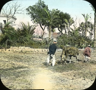 "<em>""Views, Objects: Egypt. General Views; People. View 002: Egypt - Ploughing, Ramleh.""</em>. Lantern slide 3.25x4in, 3.25 x 4 in. Brooklyn Museum, lantern slides. (S10_08_Egypt_GeneralViews_People002.jpg"
