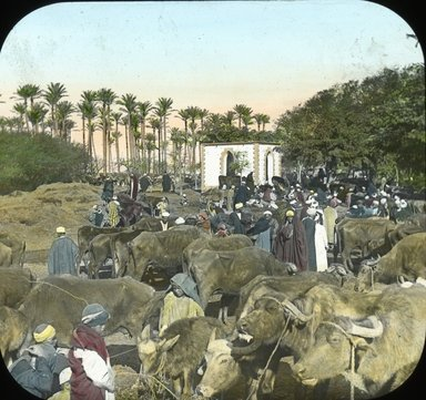 "<em>""Views, Objects: Egypt. General Views; People. View 005: Egypt - Buffalo Market, Gizeh.""</em>. Lantern slide 3.25x4in, 3.25 x 4 in. Brooklyn Museum, lantern slides. (Photo: T. H. McAllister, New York, S10_08_Egypt_GeneralViews_People005.jpg"