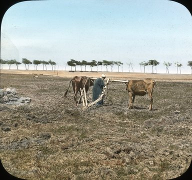 "<em>""Views, Objects: Egypt. General Views; People. View 008: Egypt - Ploughing near the Pyramids of Gizeh.""</em>. Lantern slide 3.25x4in, 3.25 x 4 in. Brooklyn Museum, lantern slides. (S10_08_Egypt_GeneralViews_People008.jpg"