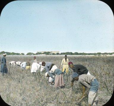 "<em>""Views, Objects: Egypt. General Views; People. View 012: Egypt - Farmers in the Fields, Cairo.""</em>, 1882. Lantern slide 3.25x4in, 3.25 x 4 in. Brooklyn Museum, lantern slides. (Photo: Wilson Photo+W186, S10_08_Egypt_GeneralViews_People012.jpg"