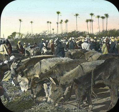 "<em>""Views, Objects: Egypt. General Views; People. View 017: Egypt - Donkey Market, Gizeh.""</em>. Lantern slide 3.25x4in, 3.25 x 4 in. Brooklyn Museum, lantern slides. (Photo: T. H. McAllister, New York, S10_08_Egypt_GeneralViews_People017.jpg"