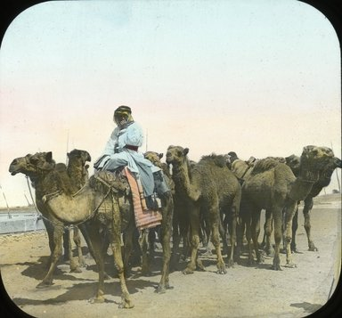 "<em>""Views, Objects: Egypt. General Views; People. View 028: Egypt - Group of Camels, Cairo.""</em>. Lantern slide 3.25x4in, 3.25 x 4 in. Brooklyn Museum, lantern slides. (Photo: T. H. McAllister, New York, S10_08_Egypt_GeneralViews_People028.jpg"