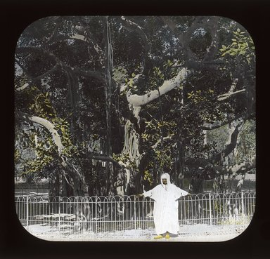 "<em>""Views, Objects: Egypt. General Views; People. View 039: Egypt - Banyan Tree, Esbekiyeh Place, Cairo.""</em>. Lantern slide 3.25x4in, 3.25 x 4 in. Brooklyn Museum, lantern slides. (S10_08_Egypt_GeneralViews_People039_SL1.jpg"