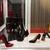 Killer Heels: The Art of the High-Heeled Shoe, September 10, 2014 through March 1, 2015 (Image: DIG_E_2014_Killer_Heels_048_PS8.jpg Brooklyn Museum photograph, 2014)