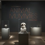 Soulful Creatures: Animal Mummies in Ancient Egypt
