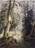 A Cedar Swamp