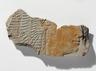 Queen Ahmose, Mother of Hatshepsut