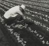 [Untitled] (Field Worker)
