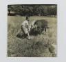 [Untitled] (Boy Feeding Cow)