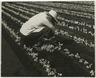 [Untitled] (Farm Worker, Florida)