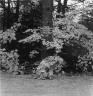 October 1981, Rangeley, Maine