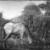 Albert Pinkham Ryder (American, 1847-1917). <em>The Grazing Horse</em>, mid 1870s. Oil on canvas, 10 3/16 x 14 1/8 in. (25.8 x 35.8 cm). Brooklyn Museum, Augustus Graham School of Design Fund, 14.554 (Photo: Brooklyn Museum, 14.554_glass_bw.jpg)
