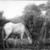 Albert Pinkham Ryder (American, 1847-1917). <em>The Grazing Horse</em>, mid 1870s. Oil on canvas, 10 3/16 x 14 1/8 in. (25.8 x 35.8 cm). Brooklyn Museum, Augustus Graham School of Design Fund, 14.554 (Photo: Brooklyn Museum, 14.554_print_bw.jpg)