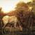 Albert Pinkham Ryder (American, 1847-1917). <em>The Grazing Horse</em>, mid 1870s. Oil on canvas, 10 3/16 x 14 1/8 in. (25.8 x 35.8 cm). Brooklyn Museum, Augustus Graham School of Design Fund, 14.554 (Photo: Brooklyn Museum, 14.554_transp200.jpg)