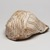 Mississippian. <em>Engraved Conch Shell</em>, 1200-1500 C.E. Conch shell, pigment, Falcon warrior: 10 7/16 × 7 1/2 × 5 1/2 in. (26.5 × 19.1 × 14 cm). Brooklyn Museum, By exchange, 60.53.1. Creative Commons-BY (Photo: , 60.53.1_view03_PS11.jpg)