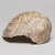 Mississippian. <em>Engraved Conch Shell</em>, 1200-1500 C.E. Conch shell, pigment, Falcon warrior: 10 7/16 × 7 1/2 × 5 1/2 in. (26.5 × 19.1 × 14 cm). Brooklyn Museum, By exchange, 60.53.1. Creative Commons-BY (Photo: , 60.53.1_view04_PS11.jpg)
