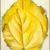 Georgia O'Keeffe (American, 1887-1986). <em>2 Yellow Leaves (Yellow Leaves)</em>, 1928. Oil on canvas, 40 x 30 1/8 in. (101.6 x 76.5 cm). Brooklyn Museum, Bequest of Georgia O'Keeffe, 87.136.6. © artist or artist's estate (Photo: Brooklyn Museum, 87.136.6_SL1.jpg)