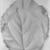 Georgia O'Keeffe (American, 1887-1986). <em>2 Yellow Leaves (Yellow Leaves)</em>, 1928. Oil on canvas, 40 x 30 1/8 in. (101.6 x 76.5 cm). Brooklyn Museum, Bequest of Georgia O'Keeffe, 87.136.6. © artist or artist's estate (Photo: Brooklyn Museum, 87.136.6_bw.jpg)