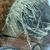 <em>Mask</em>. Wood, barkcloth, fiber, pigment, paste, tapestry turban snail (Turbo petholatus) opercula, 15 15/16 × 9 × 14 in. (40.5 × 22.9 × 35.6 cm). Brooklyn Museum, Brooklyn Museum Collection, 01.300. Creative Commons-BY (Photo: , CUR.01.300_detail05.jpg)