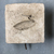 <em>Mold for Making a Benu Bird</em>. Limestone, 4 9/16 × 4 1/2 × 1 1/2 in. (11.6 × 11.5 × 3.8 cm). Brooklyn Museum, Gift of Evangeline Wilbour Blashfield, Theodora Wilbour, and Victor Wilbour honoring the wishes of their mother, Charlotte Beebe Wilbour, as a memorial to their father, Charles Edwin Wilbour, 16.127. Creative Commons-BY (Photo: , CUR.16.127_view01.jpg)