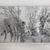 Félix Bracquemond (French, 1833-1914). <em>The Willows at Mottiaux (Les saules des Mottiaux)</em>, 1868. Etching on laid paper, 7 15/16 x 11 9/16 in. (20.2 x 29.4 cm). Brooklyn Museum, By exchange, 36.968 (Photo: Brooklyn Museum, CUR.36.968-1.jpg)