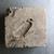 <em>Mold for Making Benu Bird</em>, 305-30 B.C.E. Limestone, 5 1/16 × 4 13/16 × 1 5/8 in. (12.8 × 12.3 × 4.2 cm). Brooklyn Museum, Charles Edwin Wilbour Fund, 37.1536E. Creative Commons-BY (Photo: , CUR.37.1536E_view01.jpg)