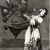 Francisco de Goya y Lucientes (Spanish, 1746-1828). <em>No Grites, Tonta</em>, 1797-1798. Etching and aquatint on laid paper, Sheet: 11 7/8 x 8 in. (30.2 x 20.3 cm). Brooklyn Museum, A. Augustus Healy Fund, Frank L. Babbott Fund, and Carll H. de Silver Fund, 37.33.74 (Photo: Brooklyn Museum, CUR.37.33.74.jpg)