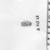 <em>Uninscribed Scarab</em>, ca. 1539-332 B.C.E. Rock crystal, 3/8 × 1/2 × 11/16 in. (1 × 1.3 × 1.8 cm). Brooklyn Museum, Charles Edwin Wilbour Fund, 37.510E. Creative Commons-BY (Photo: , CUR.37.510E_NegB_print_bw.jpg)