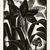 Grace Arnold Albee (American, 1890-1995). <em>My Amaryllis</em>, 1978. Wood engraving on vellum, Image: 7 3/4 x 5 7/8 in. (19.7 x 14.9 cm). Brooklyn Museum, Designated Purchase Fund, 78.230.2. © artist or artist's estate (Photo: Brooklyn Museum, CUR.78.230.2.jpg)
