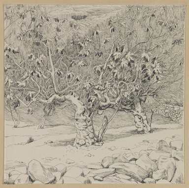 James Tissot (French, 1836-1902). <em>Fig-tree, Valley of Hinnom</em>, 1886-1887 or 1889. Ink on paper mounted on board, Sheet: 6 1/4 x 6 1/4 in. (15.9 x 15.9 cm). Brooklyn Museum, Purchased by public subscription, 00.159.446 (Photo: Brooklyn Museum, 00.159.446_IMLS_PS3.jpg)