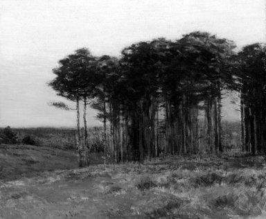 Charles Warren Eaton (American, 1857-1937). <em>Connecticut Pines</em>, 1904. Oil on canvas, 29 15/16 x 36 1/16 in. (76 x 91.6 cm). Brooklyn Museum, John B. Woodward Memorial Fund, 04.296 (Photo: Brooklyn Museum, 04.296_bw.jpg)