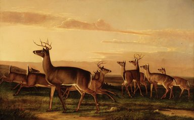 Victor Gifford Audubon (American, 1809-1860). <em>Startled Deer--A Prairie Scene</em>, ca. 1847. Oil on canvas, 37 13/16 x 59 15/16 in. (96 x 152.2 cm). Brooklyn Museum, Gift of A. B. Baylis through The Brooklyn Institute of Arts and Sciences, 05.85 (Photo: Brooklyn Museum, 05.85_transp82.jpg)
