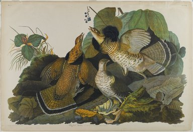 John James  Audubon (American, born Haiti, 1785-1851). <em>Ruffed Grouse</em>, 1861. Chromolithograph, sheet:  27 1/8 x 40 in.  (68.9 x 101.6 cm). Brooklyn Museum, Gift of Seymour R. Husted Jr., 06.339.28 (Photo: Brooklyn Museum, 06.339.28_PS1.jpg)