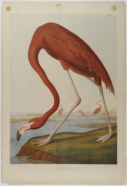John James  Audubon (American, born Haiti, 1785-1851). <em>American Flamingo</em>, 1861. Chromolithograph, 27 x 39 3/4 in.  (68.6 x 101.0 cm). Brooklyn Museum, Gift of Seymour R. Husted Jr., 06.339.2 (Photo: Brooklyn Museum, 06.339.2_PS1.jpg)