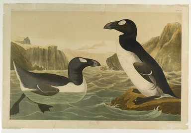 John James  Audubon (American, born Haiti, 1785-1851). <em>Great Auk</em>, 1861. Chromolithograph Brooklyn Museum, Gift of Seymour R. Husted Jr., 06.339.39 (Photo: Brooklyn Museum, 06.339.39_PS1.jpg)