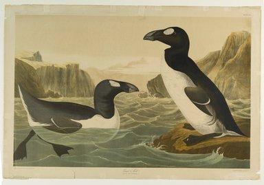 John James  Audubon (American, born Haiti, 1785-1851). <em>Great Auk</em>, 1861. Chromolithograph Brooklyn Museum, Gift of Seymour R. Husted Jr., 06.339.39 (Photo: Brooklyn Museum, 06.339.39_PS1.jpg)
