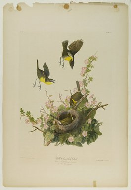 John James  Audubon (American, born Haiti, 1785-1851). <em>Yellow-breasted Chat</em>, 1861. Chromolithograph Brooklyn Museum, Gift of Seymour R. Husted Jr., 06.339.3 (Photo: Brooklyn Museum, 06.339.3_PS1.jpg)