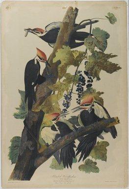 John James  Audubon (American, born Haiti, 1785-1851). <em>Pileated Woodpecker</em>, 1861. Chromolithograph, 40 x 27 in.  (101.6 x 68.6 cm). Brooklyn Museum, Gift of Seymour R. Husted Jr., 06.339.51 (Photo: Brooklyn Museum, 06.339.51_PS1.jpg)