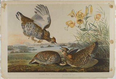 John James  Audubon (American, born Haiti, 1785-1851). <em>Pinnated Grous</em>, 1861. Chromolithograph Brooklyn Museum, Gift of Seymour R. Husted Jr., 06.339.69 (Photo: Brooklyn Museum, 06.339.69_PS1.jpg)