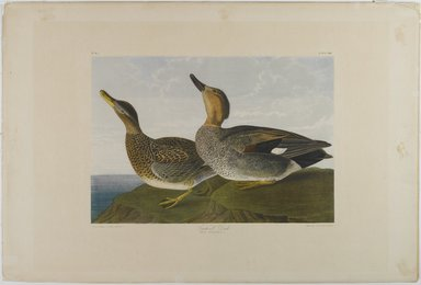 John James  Audubon (American, born Haiti, 1785-1851). <em>Gadwall Duck</em>, 1861. Lithograph, 16 x 23 1/2 in.  (40.6 x 59.7 cm). Brooklyn Museum, Gift of Seymour R. Husted Jr., 06.339.88 (Photo: Brooklyn Museum, 06.339.88_PS1.jpg)