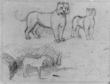 Antoine-Louis Barye (French, 1795-1875). <em>Two Standing Lionesses and a Horse</em>, n.d. Graphite on laid paper, Sheet: 8 5/8 x 11 3/8 in. (21.9 x 28.9 cm). Brooklyn Museum, Purchased by Special Subscription, 10.217 (Photo: Brooklyn Museum, 10.217_bw.jpg)