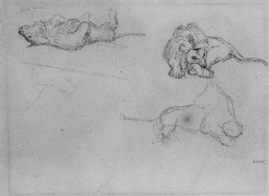 Antoine-Louis Barye (French, 1795-1875). <em>Studies of a Lion</em>, n.d. Drawing in graphite on heavy wove paper, Sheet: 8 5/8 x 11 3/8 in. (21.9 x 28.9 cm). Brooklyn Museum, Purchased by Special Subscription, 10.219 (Photo: Brooklyn Museum, 10.219_bw.jpg)