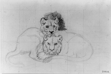 Antoine-Louis Barye (French, 1795-1875). <em>Two Lions</em>, n.d. Graphite on laid paper, Sheet: 5 1/8 x 7 9/16 in. (13 x 19.2 cm). Brooklyn Museum, Purchased by Special Subscription, 10.220 (Photo: Brooklyn Museum, 10.220_bw.jpg)