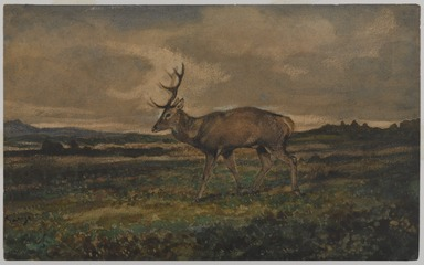 Antoine-Louis Barye (French, 1795-1875). <em>Stag Walking (Cerf marchant)</em>, n.d. Watercolor and gouache on cream-colored wove paper, 5 1/2 x 9 in. (14 x 22.9 cm). Brooklyn Museum, Purchased by Special Subscription, 10.97 (Photo: , 10.97_PS9.jpg)