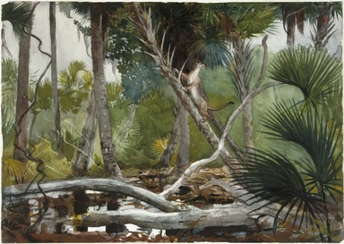 Winslow Homer (American, 1836-1910). <em>In the Jungle, Florida</em>, 1904. Transparent watercolor with touches of opaque watercolor over graphite on off-white, moderately thick, moderately textured wove paper, 13 7/8 x 19 11/16 in. (35.2 x 50 cm). Brooklyn Museum, Museum Collection Fund and Special Subscription, 11.547 (Photo: Brooklyn Museum, 11.547_SL1.jpg)